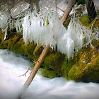 Karst Spring Freezeup by Keith Doucet