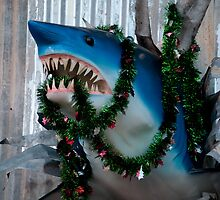 Festive Shark by Terry Runion