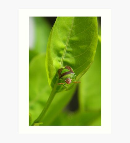 """I'm a Stink Bug, What are You?"" Art Print"