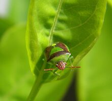 """I'm a Stink Bug, What are You?"" by peacegirl"