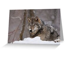 Snow Nose Greeting Card