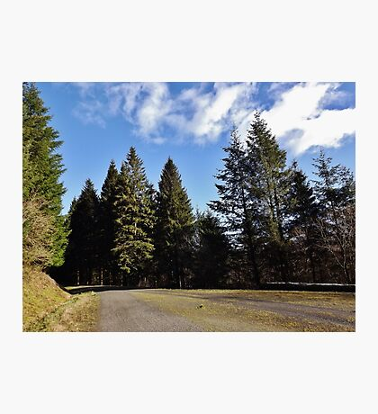 Forestry road Photographic Print