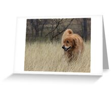 River in Tall Grass Greeting Card