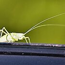 The Green Grasshopper by Jeff Ore