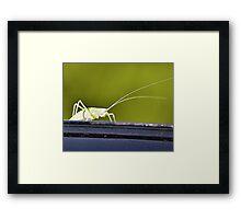 The Green Grasshopper Framed Print