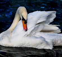 Graceful Swan in the Blue Water by JennyRainbow