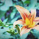 Orange by meredith brown