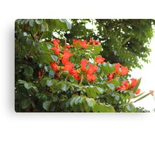 Red Flower Blossoms on a Tree Canvas Print