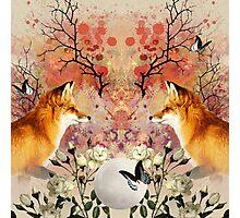 Fox Moonlight Photographic Print