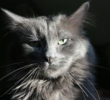 Smokey Whiskers by Megan Noble