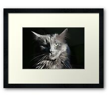 Smokey Whiskers Framed Print