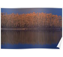 'gumtrees reflection in lake', Pemberton, WA Poster