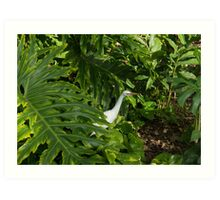 Hawaiian Garden Visitor - a Bright White Egret in the Lush Greenery Art Print