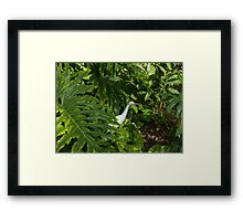 Hawaiian Garden Visitor - a Bright White Egret in the Lush Greenery Framed Print