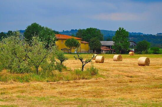 Tuscan Life II by Denis Molodkin