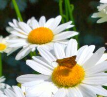 Moth on a Daisy Sticker