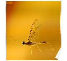 The Mayfly Poster