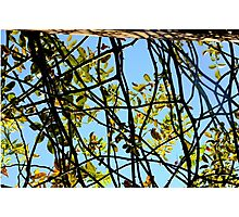 Branch Out Photographic Print
