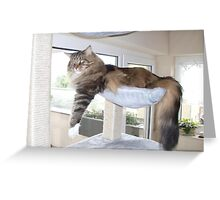 relaxing Jimmy Greeting Card
