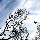 Birds by gilleebee