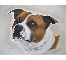 Staffordshire Bull Terrier in Pastel Photographic Print