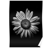 Backyard Flowers In Black And White 13 Poster