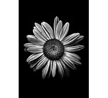 Backyard Flowers In Black And White 13 Photographic Print