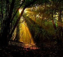 Raggi di luce nel bosco - Missano - (zocca modena italy ) _4244_ by primo masotti
