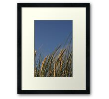 Dune grass, Ireland Framed Print