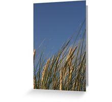 Dune grass, Ireland Greeting Card