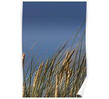 Dune grass, Ireland Poster