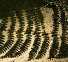 shadow fern  by Jeff Stroud