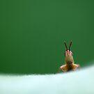 Wait For Me! by VladimirFloyd
