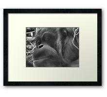 Smuggles Framed Print