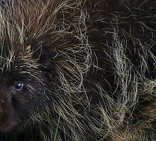 """My"" Porcupine by Betsy  Seeton"