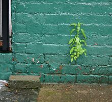 Plant in Wall Crevice by Erica Torres