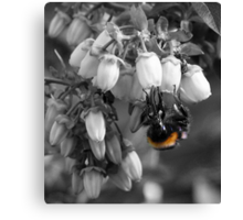 Just The Colour Of The Bee. Canvas Print