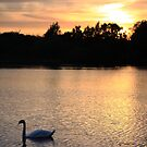Sunset at Tiddenfoot 04 July 2015 #2 by Dale Rockell