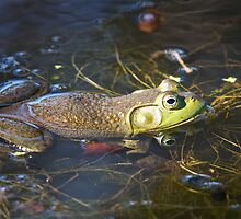 FROG IN POND by Photography by TJ Baccari