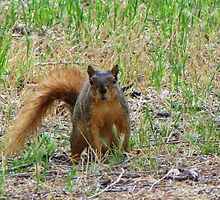 You Better Git, Skat, I Is Da Meanest Squirrel Der Iz by trueblvr