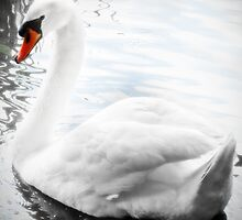 Pure and white on the water by beatrice11
