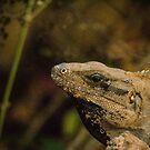 Iguana at Chechen Itza by Yukondick