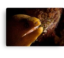 Golden Spotted Moray Eel Canvas Print