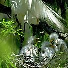 Great White and Baby Egrets by Photography by TJ Baccari