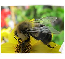 ~ Bee Happy ~ Poster