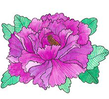 Wild Peony Watercolor by FloraminaDesign