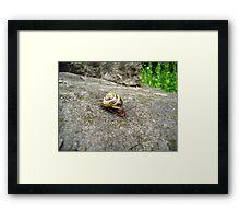 Mr. Snail Framed Print