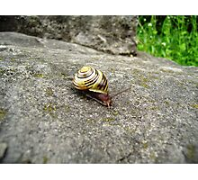 Mr. Snail Photographic Print