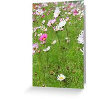 Field of cosmo - 2011 Greeting Card
