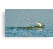 Water Landing Canvas Print